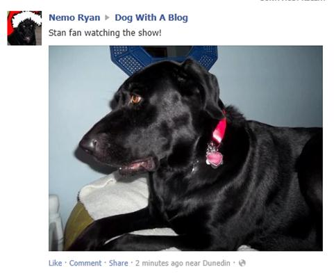 fb pic dog with a blog