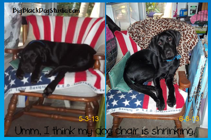 growing dog shrinking chair