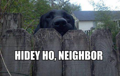 hidey ho neighbor