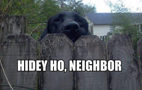 hidey ho neighbor