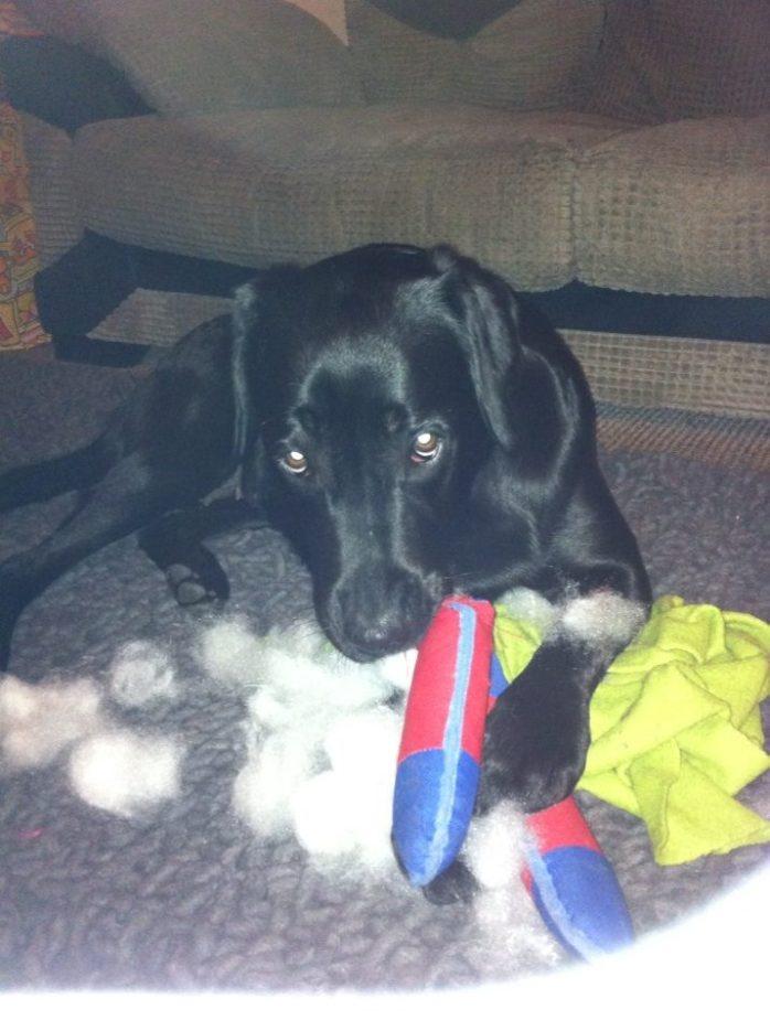 Kay shredding boomerang toy 10-18-13