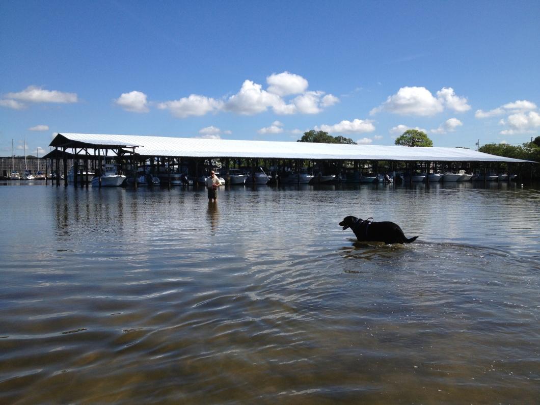 Nemo splashing around in dog cove with Charlie