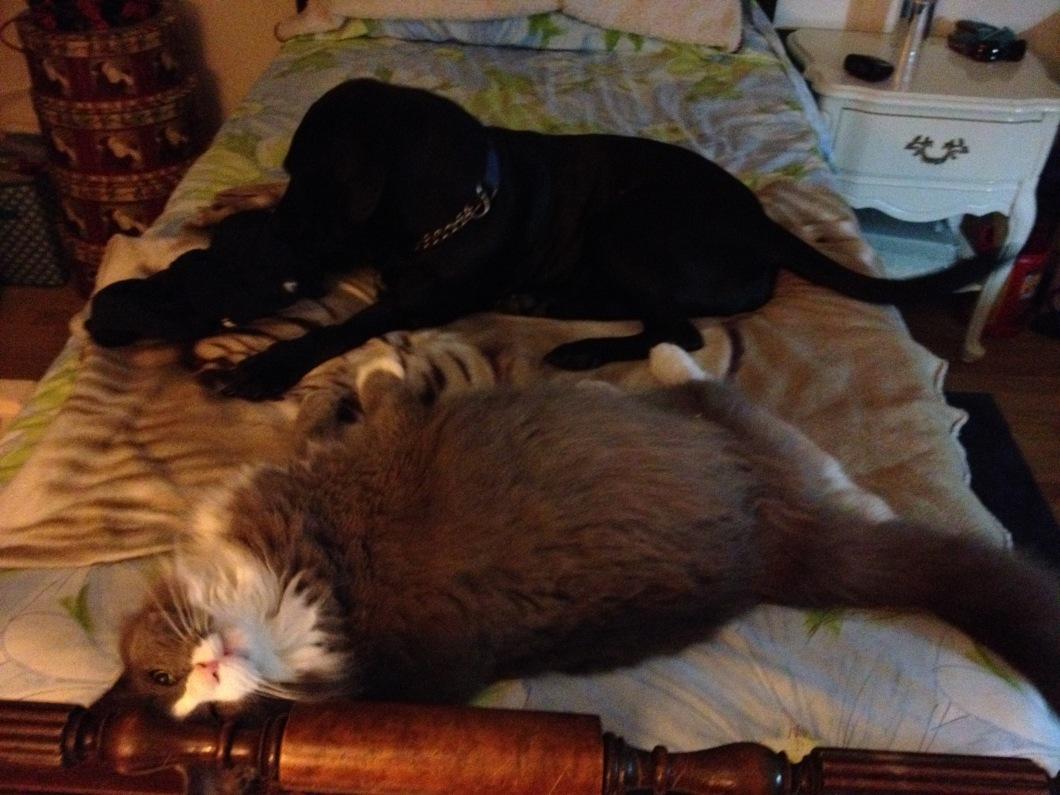 Snuggle buddies Daisy Mae and Phoofie